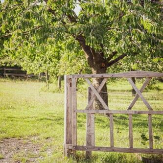 Streuobstwiesen liefern leckeres Obst und sind ein Symbol für eine naturverträgliche Landbewirtschaftung.